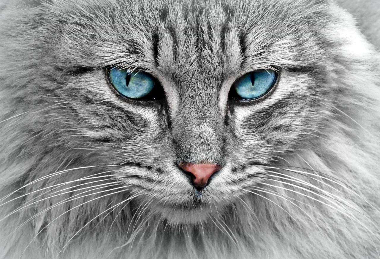 Про лучшего в мире кота.